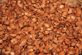 Argan Shells