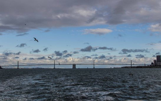 Bay Bridge from the ferry