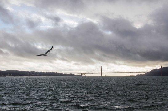 Golden Gate Bridge from the ferry