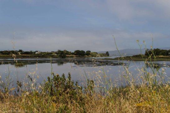 Bolinas Lagoon Nature Preserve