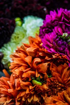 Dahlias at LC Wholesale & Floral Design
