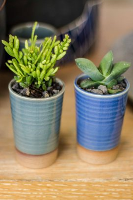 Tiny potted plants