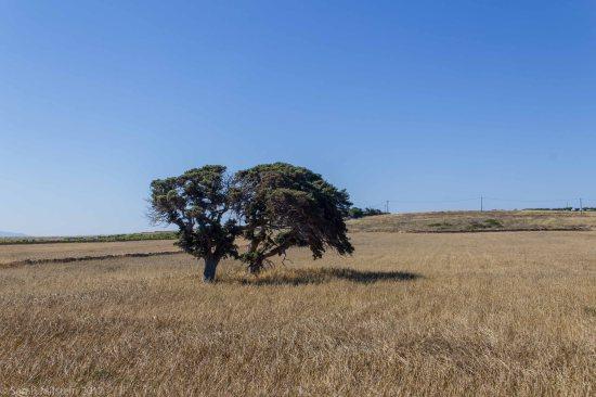 Fields near Xifara